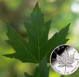 www.numizmatyczny.pl 5 dolarów, Srebrna moneta bulionowa Liść Klonu (Silver Maple Leaf) 1 oz