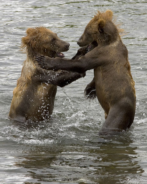 Kolekcja Młode Zwierzęta Niedźwiedź brunatny